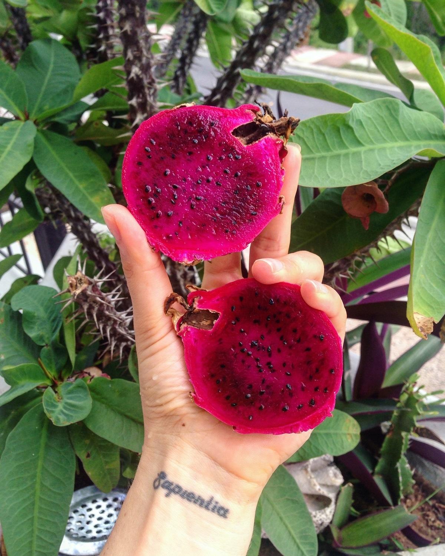 очень редкие тропические ягоды фото удержала развода даже